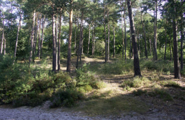 Landes-Ermenonville