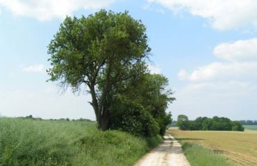 Plailly_Chemin-blanc-photo-2
